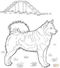 Click The Husky Coloring Pages