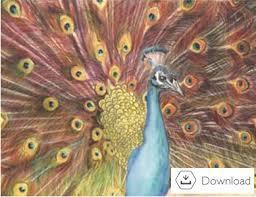 Derwent Inktense Pencils Peacock Project2