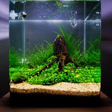 July 2010 Aquascape Of The Month: