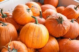 Sarasota Pumpkin Festival by 20 Pumpkin Festival Sarasota 19 Ditch The Cheap Halloween