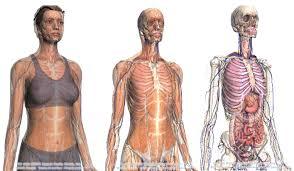 interieur corps humain femme visualiser l anatomie du corps humain en 3d grâce à browser