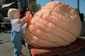 Pumpkin Patch Boulder by Photos 25 Giant Pumpkins To Celebrate Halloween Home And Garden