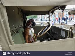 Dog Driving A Truck, Dog Behind The Steering Wheel Of A Lorry ... Alberta Spca Opens Invesgation After Photos Show Dogs Above Dog Truck Stock Photos Royalty Free Images Travel Hammock Back Seat Cover Protect Your Car Or Is It Legal In Washington To Drive With Your Dog Loose Bed Harness Korrectkritterscom Angry Truck Driver Stock Image Image Of Commuting 35342397 Scania T Rjl Mad Dog Truck Skin 130 Euro Simulator 2 Mods Found Wearing A Jacket What Was The Pocket Led Traveling Pet This Holiday Part 4 Mckinney Animal Tree Roots Tampa Food Trucks Roaming Hunger Facilities Great Of Cute Dogs