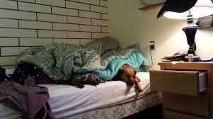 Let sleeping dogs lie Rosie sleeping in my bed under the …