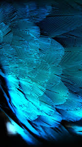 Blue HD Peacock Feathers Android Wallpaper
