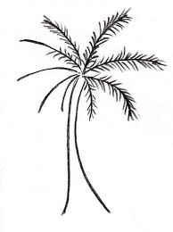 Palm Tree Drawing 184857 Coloring Pages Trees
