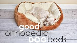 best orthopedic dog beds for large dogs herepup