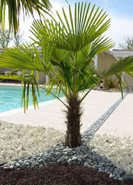 piscine et jardin conseils jardinage l entretien du palmier
