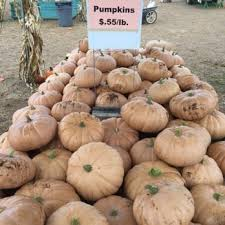 Pumpkin Picking Nj 2015 by Eastmont Orchards 120 Photos U0026 37 Reviews Fruits U0026 Veggies