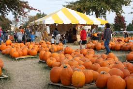 Pumpkin Patches Maryland by Events Archive Coalition Against Childhood Cancer