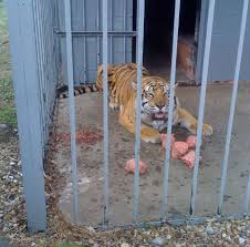 This Is Tony The Tiger! For More Than 10 Years, Tony The Tiger Has ...