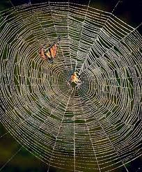 araignée du soir espoir thédebonneval