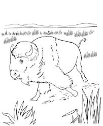 Wild Animal Coloring Page Free Printable North American Bison Pages Featuring Buffalo Sheets