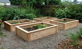 Creative of Raised Garden Bed Cedar Cedar Raised Bed Gardening Kit