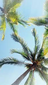 Palm Trees Summer Iphone Wallpaper B A C K G R O U N D S H E 640x1136