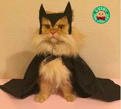 cat batman costume luigi the cat and his adventures