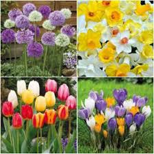 fall bulb collections for sale buy flower bulbs in bulk save
