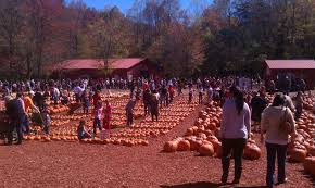 Burts Pumpkin Farm 2015 by Fire Inc Atlanta Goes On A Pumpkin Adventure Fire Inc Fire Inc