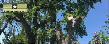 Home Care fers Tree Care in Pryor OK