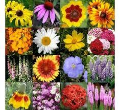 buy rainy winter seasonal flowers pack of 27 seeds pack