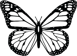 Swallowtail Butterfly Coloring Page Of Free