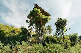 100 Hotels In Page Utah 10 TreeHouse In The US