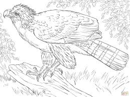 Harpy Eagle Coloring Page American Free Printable Pages For Kids