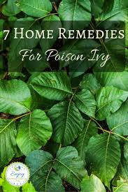 Christmas Tree Rash Pityriasis Rosea Treatment by The 25 Best Remedies For Poison Ivy Ideas On Pinterest