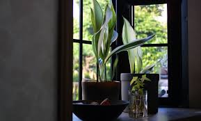 Small Plants For The Bathroom by Apartment Living 101 The 10 Best Plants For Bathrooms 6sqft
