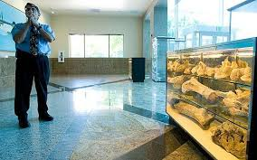 Gabe Karam Facilities Management Director Of San Joaquin County Shows A Display Prehistoric Woolly Mammoth Bones That Were Dug Up Underneath The Site