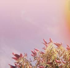 Adore Smashing Pumpkins Rar by The Active Listener December 2013