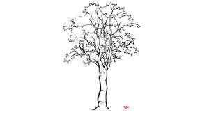 550px nowatermark Draw a Detailed Tree Step 6 preview Version 2