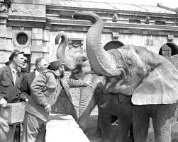 Bronx Zoo Halloween 2014 by 1959 The Year Fidel Castro Completely Charmed America