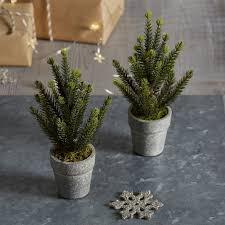 Plantable Christmas Trees For Sale by Christmas Christmas Season Real Tree Facts Trees For Sale
