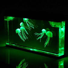 best 25 jellyfish tank ideas on pinterest pet jellyfish