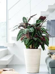 5 pflanzen die hervorragend ohne sonne auskommen