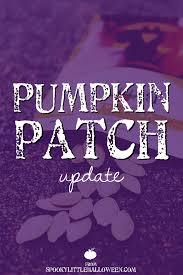 Methodist Church Pumpkin Patch Wilmington Nc by 100 Houston Area Pumpkin Patches Travel U2013