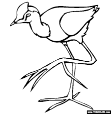 Bird Comb Crested Jacana Coloring Page
