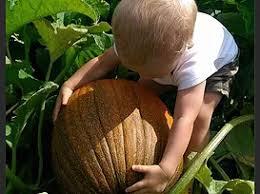 Pumpkin Patch Chesapeake Va by Hickory Ridge Farm