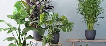 top 12 zimmerpflanzen bakker