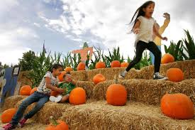 Best Pumpkin Patch Near Corona Ca by It U0027s A Great Pumpkin Time At The Pumpkin Patch In Redlands U2013 Press