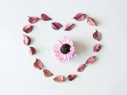 coeur de en pot coeur de pot pourri photo stock image 64600831