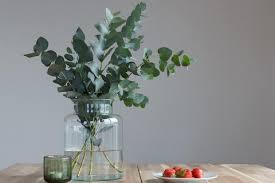 eukalyptus pflanzen pflegen schneiden schöner wohnen