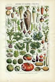 Fine Giclee Print Reproduction Of 1948 French Vintage Botanical Poster Vegetables Retro Kitchen Decor