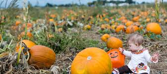 Miami Lakes Church Pumpkin Patch by Best Pumpkin Patches Near Miami For Families Mommy Nearest