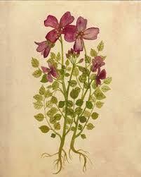 Purple Flowers Print 8x10