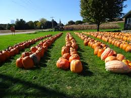 Free Pumpkin Farms In Wisconsin by File Kalscheur U0027s Pumpkin Patch Panoramio Jpg Wikimedia Commons