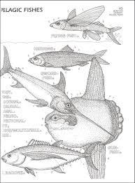 Marine Biology Worksheets Free Library