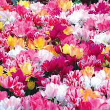 119 best fall planting images on fall planting bulb