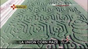 Las Cruces Pumpkin Patch Maze by Visitors Get Lost In The La Union Corn Maze Kvia